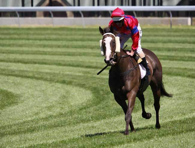Melbourne Cup favourite and outsider